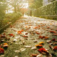 枯葉の散らばる歩道と歩く人々 20021005881| 写真素材・ストックフォト・画像・イラスト素材|アマナイメージズ