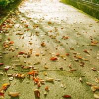 西日を受けて輝く歩道と散らばる枯葉 20021005882| 写真素材・ストックフォト・画像・イラスト素材|アマナイメージズ