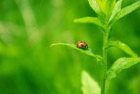 草とてんとう虫