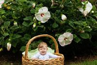 バスケットに入った生後6ヶ月の女の子と花