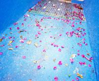 青い床と赤い花びら 20021005959| 写真素材・ストックフォト・画像・イラスト素材|アマナイメージズ