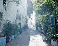白い街と植物 20021005960| 写真素材・ストックフォト・画像・イラスト素材|アマナイメージズ