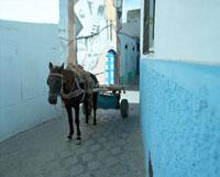青い街の中を荷物を引く馬 20021005961| 写真素材・ストックフォト・画像・イラスト素材|アマナイメージズ