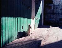 光の中の猫 20021005964| 写真素材・ストックフォト・画像・イラスト素材|アマナイメージズ