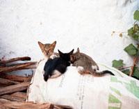 モロッコの猫 20021005998| 写真素材・ストックフォト・画像・イラスト素材|アマナイメージズ