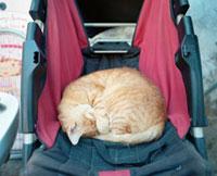 モロッコの眠る猫 20021006005| 写真素材・ストックフォト・画像・イラスト素材|アマナイメージズ