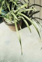 軒先で午後の日差しを受ける植木鉢 20021006035| 写真素材・ストックフォト・画像・イラスト素材|アマナイメージズ