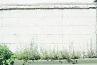 ひび割れた白い壁と強い日差しを受けて伸びる雑草
