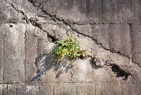 壁の隙間の植物
