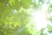新緑と木漏れ日 20021006057| 写真素材・ストックフォト・画像・イラスト素材|アマナイメージズ