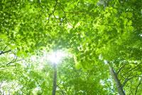 新緑と木漏れ日 20021006058| 写真素材・ストックフォト・画像・イラスト素材|アマナイメージズ