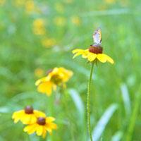 蝶と花 20021006067| 写真素材・ストックフォト・画像・イラスト素材|アマナイメージズ