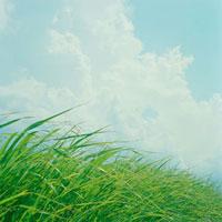 草と青空 20021006068| 写真素材・ストックフォト・画像・イラスト素材|アマナイメージズ