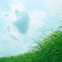 草と青空 20021006070| 写真素材・ストックフォト・画像・イラスト素材|アマナイメージズ