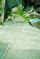 小道を歩く猫