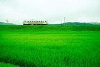 水田の中を走る電車