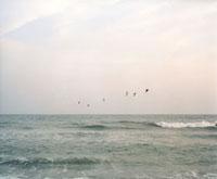 海をわたる鳥