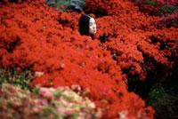 赤い花の中に立つ女性