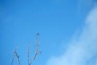 木にとまるトンボと青空