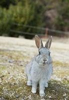 ウサギ 20021006343| 写真素材・ストックフォト・画像・イラスト素材|アマナイメージズ
