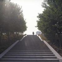 階段を上る人と木