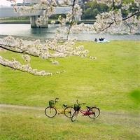 河川敷の自転車と花見客 20021006354| 写真素材・ストックフォト・画像・イラスト素材|アマナイメージズ