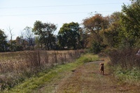 田園の道と犬