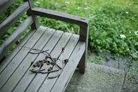 古い木製のベンチとどんぐりの欠片