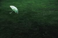 雨あがりの芝生とビニル傘 20021006468| 写真素材・ストックフォト・画像・イラスト素材|アマナイメージズ