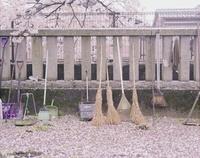 神社の境内に積もった桜の花びらと掃除用具 20021006497| 写真素材・ストックフォト・画像・イラスト素材|アマナイメージズ