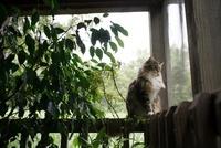 窓の側に座る猫と観葉植物