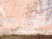 壁と木の影