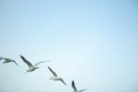 渡り鳥と空