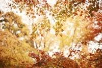 東福寺の色とりどりの紅葉 20021006646| 写真素材・ストックフォト・画像・イラスト素材|アマナイメージズ