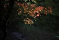 紅く染まりゆく紅葉 20021006647| 写真素材・ストックフォト・画像・イラスト素材|アマナイメージズ