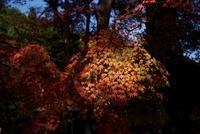 木漏れ日に照らされる紅葉 20021006668| 写真素材・ストックフォト・画像・イラスト素材|アマナイメージズ