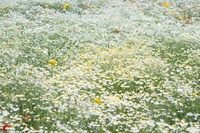 公園に咲く花