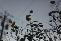 曇天と植物の葉と電柱 20021006842| 写真素材・ストックフォト・画像・イラスト素材|アマナイメージズ