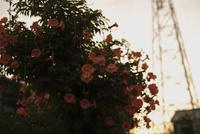 夕暮れの鉄塔と 20021006854| 写真素材・ストックフォト・画像・イラスト素材|アマナイメージズ