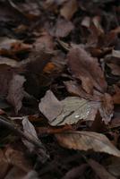枯葉と水滴 20021006857| 写真素材・ストックフォト・画像・イラスト素材|アマナイメージズ