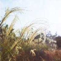 空と輝くススキ 20021006869| 写真素材・ストックフォト・画像・イラスト素材|アマナイメージズ