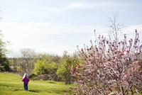 外国人の女の子と桜の木