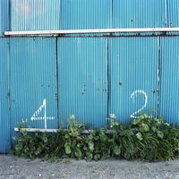 青いトタンに書かれた数字と白い花