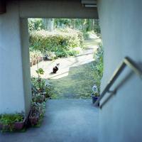 団地の庭の猫
