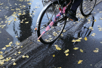 水溜りを走る自転車と銀杏の落ち葉 20021006984| 写真素材・ストックフォト・画像・イラスト素材|アマナイメージズ