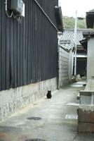 真鍋島の黒猫