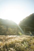 鉄橋を渡る因美線の電車 20021007007| 写真素材・ストックフォト・画像・イラスト素材|アマナイメージズ