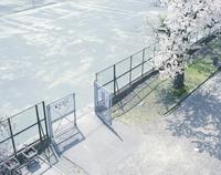 テニスコートの入り口と桜の木 20021007154| 写真素材・ストックフォト・画像・イラスト素材|アマナイメージズ