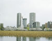 不忍池から望む建設中のビル 20021007158| 写真素材・ストックフォト・画像・イラスト素材|アマナイメージズ