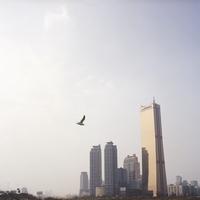 ビル群と一羽の鳥
